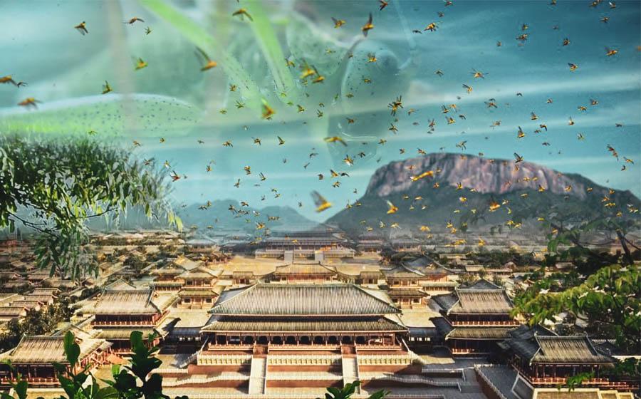 「二愁東西餓死人」:億萬蝗蟲的到來